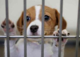 Χρήματα στην Τοπική Αυτοδιοίκηση για την ενίσχυση των καταφυγίων αδέσποτων ζώων - Κεντρική Εικόνα