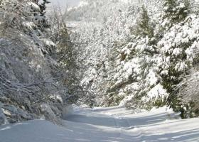 Xιονισμένα τοπία στην Ελλάδα την ημέρα των Χριστουγέννων (video) - Κεντρική Εικόνα