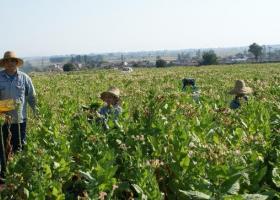 Αγροτικές επιδοτήσεις: Πότε λήγει η προθεσμία των αιτήσεων - Κεντρική Εικόνα