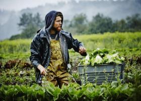Η ΓΣΕΕ κάνει λόγο για σύγχρονη δουλεία στον αγροτικό τομέα της Ελλάδας - Κεντρική Εικόνα