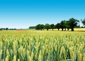 ΟΟΣΑ – FAΟ: Πιθανή μείωση τιμών στα αγροτικά προϊόντα λόγω πανδημίας  - Κεντρική Εικόνα