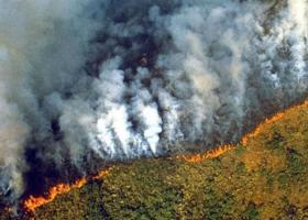 Φλέγεται ο Αμαζόνιος - Τεράστια οικολογική καταστροφή στον παγκόσμιο πνεύμονα οξυγόνου - Κεντρική Εικόνα
