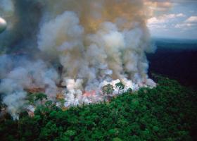 Πυρκαγιές στον Αμαζόνιο: Βασική αιτία η παγκόσμια ανάγκη για βοδινό κρέας και σόγια - Κεντρική Εικόνα