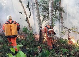 «Αμαζόνιος SOS»:Ο πνεύμονας του πλανήτη είναι στις φλόγες - Κεντρική Εικόνα
