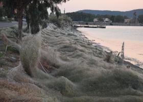 «Πέπλο» αράχνης...κατάπιε 300 μέτρα βλάστησης στο Αιτωλικό (Photos) - Κεντρική Εικόνα