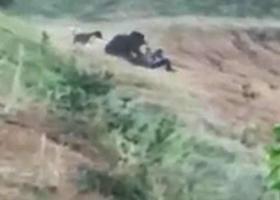 Σοκαριστικό βίντεο: Η τελευταία του selfie με μια αρκούδα - Κεντρική Εικόνα