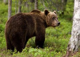 Τρίκαλα: Γυναίκα βοσκός ήρθε πρόσωπο με πρόσωπο με αρκούδα - Η αντίδρασή της την έσωσε - Κεντρική Εικόνα