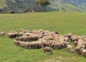 Έως 11 Απριλίου οι αιτήσεις για τη Βιολογική Κτηνοτροφία - Κεντρική Εικόνα
