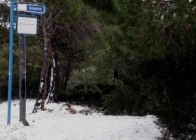 Χιονίζει στην Αττική και η τροχαία έλαβε τα πρώτα μέτρα για την πρόληψη ατυχημάτων - Κεντρική Εικόνα