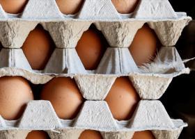Στο Ευρωκοινοβούλιο το διατροφικό σκάνδαλο με τα τοξικά αυγά - Κεντρική Εικόνα