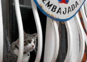 Ποια ήταν η μοίρα του γάτου του Τζούλιαν Ασάνζ μετά τη σύλληψή του - Κεντρική Εικόνα