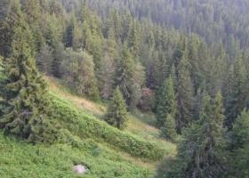 ΥΠΕΝ: Επί τάπητος τα αναξιοποίητα κοινοτικά κονδύλια για τα δάση - Κεντρική Εικόνα