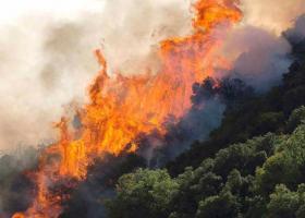 Υπό έλεγχο φωτιά που ξέσπασε στην Κασσάνδρα Χαλκιδικής - Κεντρική Εικόνα