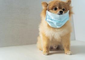 Τουχτερά πρόστιμα για τους ιδιοκτήτες σκύλων που γαβγίζουν το μεσημέρι! Δείτε τα ποσά - Κεντρική Εικόνα