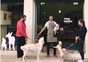 Τώρα έχουν και οι σκύλοι τον... φούρνο τους στα Άνω Πατήσια - Κεντρική Εικόνα