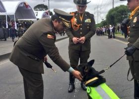 Κολομβία: Το πιο ισχυρό καρτέλ ναρκωτικών... επικήρυξε με 70.000 δολ. έναν σκύλο! (photos) - Κεντρική Εικόνα