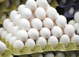 Δεκαπέντε  χώρες της ΕΕ, η Ελβετία και το Χονγκ Κονγκ έχουν πληγεί από την κρίση με τα μολυσμένα αυγά - Κεντρική Εικόνα