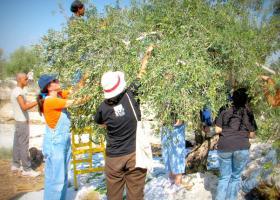 Πρωτοβουλίες της αυτοδιοίκησης για την ανάπτυξη του ελαιοτουρισμού στην Κρήτη - Κεντρική Εικόνα