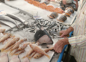 Έρχεται σήμα «Fish from Greece-Ελληνικό Ψάρι» για Ελλάδα και εξωτερικό - Κεντρική Εικόνα