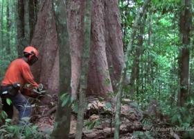 «Μαύρος» Ιούλιος για τη Βραζιλία που τετραπλασίασε την αποψίλωση δασών - Κεντρική Εικόνα