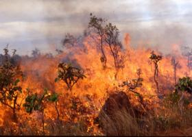 Ζάκυνθος: Μεγάλη πυρκαγιά στο χωριό Κοιλιωμένος - Κεντρική Εικόνα