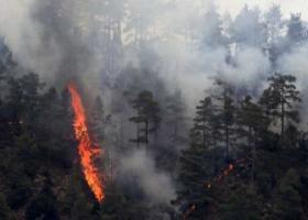 Σε εξέλιξη πυρκαγιά στην Κάρυστο - Δεν κινδυνεύουν κατοικημένες περιοχές - Κεντρική Εικόνα