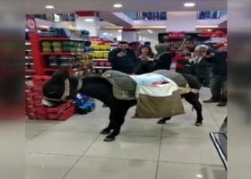 Πηγαίνουν στο σούπερ μάρκετ με... γαϊδούρια για να μην πληρώσουν σακούλα! (video) - Κεντρική Εικόνα