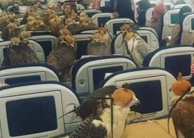 Απίστευτη φωτογραφία: Δεκάδες γεράκια Σαουδάραβα πρίγκιπα ταξίδεψαν σαν επιβάτες με αεροσκάφος ! - Κεντρική Εικόνα