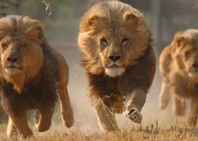Λιοντάρια κατασπάραξαν δυο λαθροθήρες στη Νότια Αφρική - Κεντρική Εικόνα