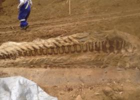 Αργεντινή: Ανακαλύφθηκε σκελετός γιγαντιαίου δεινόσαυρου ηλικίας μεγαλύτερης των 200 εκ. ετών - Κεντρική Εικόνα