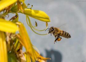 Στρατιωτικός πέθανε από τσίμπημα μέλισσας στα Γρεβενά - Κεντρική Εικόνα