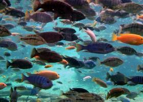 «SOS» από μπακαλιάρους και καρχαρίες στη Μεσόγειο - Κεντρική Εικόνα