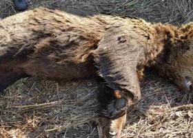 Η πρώτη νεκρή αρκούδα της φετινής εαρινής περιόδου - Κεντρική Εικόνα