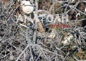 Μυστήριο με ανθρώπινα οστά στη νήσο Χρυσή - Κεντρική Εικόνα
