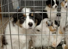 Μεγάλη ευρωπαϊκή χώρα απαγορεύει την πώληση σκύλων και γάτων από pet shops!  - Κεντρική Εικόνα