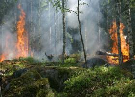 Συνεχίζουν να αυξάνονται και να επεκτείνονται οι πυρκαγιές στον Αμαζόνιο - Κεντρική Εικόνα