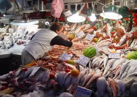 Ψάρια-δηλητήριο στον Πειραιά  - Κεντρική Εικόνα