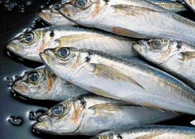 Ψάρια ιχθυοτροφείου vs ανοικτής θάλασσας: όσα πρέπει να ξέρετε - Κεντρική Εικόνα