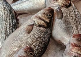 Πειραιάς: Κατάσχεσαν ληγμένα κατεψυγμένα ψάρια 2.144 κιλών - Κεντρική Εικόνα