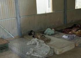 Πτηνοτροφείο-κολαστήριο για 14 μετανάστες από το Πακιστάν (photos) - Κεντρική Εικόνα