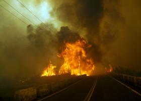 Πυρκαγιά στην Εύβοια: Συνελήφθη 64χρονος, είχε ανάψει φωτιά έξω από το σπίτι του - Κεντρική Εικόνα