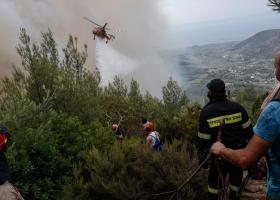 Συνελήφθη εμπρηστής που είχε κάψει τρία δάση στην Εύβοια - Κεντρική Εικόνα