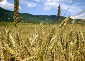 Κίνα: Η Τράπεζα Αγροτικής Ανάπτυξης ενέκρινε την έκτακτη χορήγηση δανείων 1,44 δισ. δολαρίων - Κεντρική Εικόνα