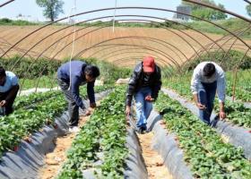 «Καμπάνα» στην Ελλάδα για τις «ματωμένες φράουλες» στη Μανωλάδα - Κεντρική Εικόνα