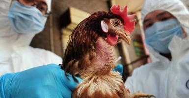ΑΗ5Ν8: Καταγράφηκε το πρώτο περιστατικό ανθρώπινης μόλυνσης με τη γρίπη των πτηνών  - Κεντρική Εικόνα