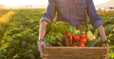 Ολοένα και περισσότερο έδαφος κερδίζουν τα βιολογικά προϊόντα - Κεντρική Εικόνα