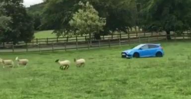 «Βοσκός» μεταμορφώνει σε... τσοπανόσκυλο το Ford Focus RS! (video) - Κεντρική Εικόνα