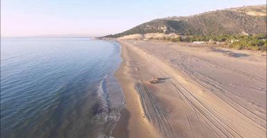 Δημοφιλής παραλία της Αχαΐας κατακλύστηκε από αγελάδες και... σβουνιές! (photos) - Κεντρική Εικόνα