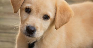 Πέντε λόγοι που η ζωή είναι καλύτερη παρέα με ένα σκύλο! - Κεντρική Εικόνα