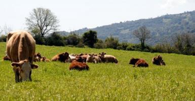 Από 26 Μαρτίου οι αιτήσεις για τη βιολογική κτηνοτροφία - Κεντρική Εικόνα